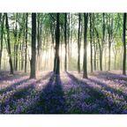 Plakat Mini ENCHANTED FOREST 40 x 50 cm