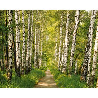 Fototapeta BIRCH PATCH SD301 254 x 368 cm