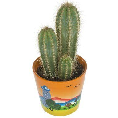 Kaktus Mexico MIX 15 cm