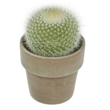 f043eeb21df9c8 Rodzaj - Kwiaty doniczkowe | Leroy Merlin - strona 5