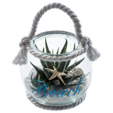 Kaktus w ozdobnej osłonce szklanej MIX 10 cm