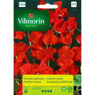 Nasiona kwiatów CZERWONY Groszek pachnący VILMORIN