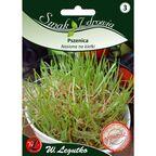 Pszenica nasiona na kiełki 50 g W. LEGUTKO