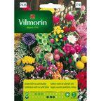 Zestaw roślin na suche bukiety nasiona tradycyjne 2 g VILMORIN