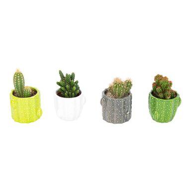 Kaktus w ceramice MIX 8 cm