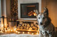 Święta ze zwierzakami. Jakie dekoracje świąteczne będą bezpieczne w mieszkaniu z psem i kotem?