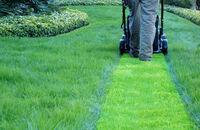 Trawnik – jak i kiedy kosić?