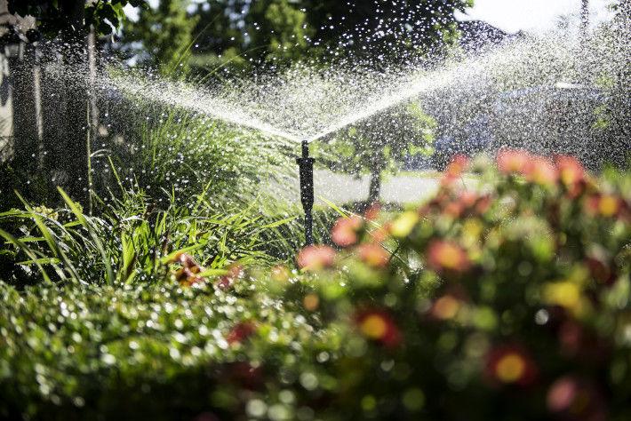 System nawadniania kropelkowego w ogrodzie