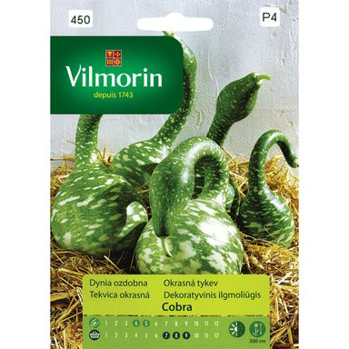 Nasiona warzyw COBRA Dynia ozdobna VILMORIN