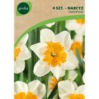 Narcyz SIR WINSTON CHURCHILL 4 szt. cebulki kwiatów GEOLIA