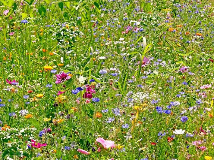 Bujna, zielona łąka z wielobarwnymi kwiatami