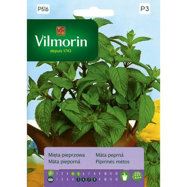 Mięta pieprzowa VILMORIN