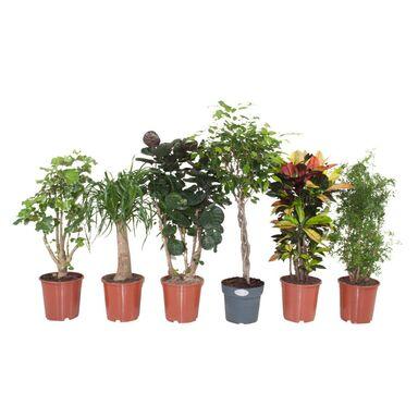 Rośliny zielone MIX 110 cm