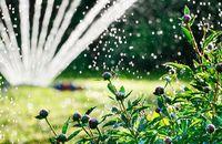 Zasady prawidłowego podlewania roślin w ogrodzie