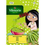 Groch cukrowy CASH VILMORIN