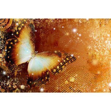 Fototapeta BUTTERFLY 146 x 208 cm
