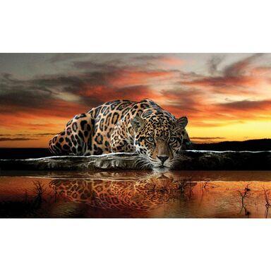 Fototapeta TIGER 146 x 208 cm