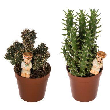 Kaktus z dekoracją MIX 12 cm