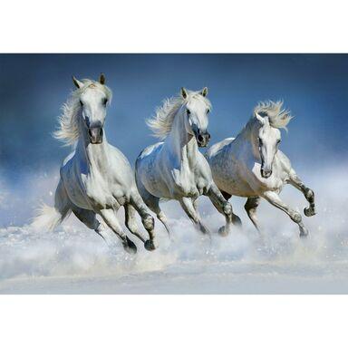 Fototapeta ARABIAN HORSES 366 x 254 cm