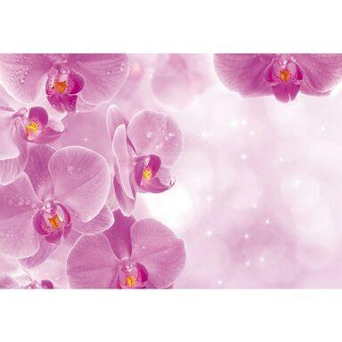 Fototapeta ORCHIDS 254 x 416 cm