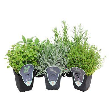 Roślina ogrodowa MIX 25 - 30 cm