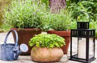 Rośliny wokół tarasu