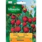 Poziomka MIGNONETTE nasiona tradycyjne 0.2 g VILMORIN