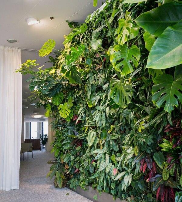 Zielona ściana z roślin