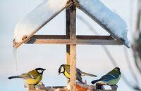 Dokarmianie ptaków zimą – jak to robić prawidłowo?