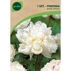 Piwonia WHITE WINGS 1 szt. cebulki kwiatów GEOLIA