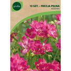 Frezja pełna różowa 10 szt. cebulki kwiatów GEOLIA
