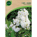 Cebulki kwiatów WHITE ADMIRAL Floks wiechowaty 1szt. GEOLIA