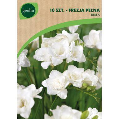 Cebulki kwiatów WHITE Frezja pełna 10szt. GEOLIA