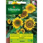 Słonecznik karłowy SUNSPOT nasiona tradycyjne 1 g VILMORIN