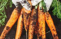 Uprawa warzyw w ogródku – jak zacząć?