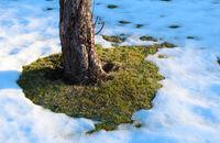 Trawnik przed zimą
