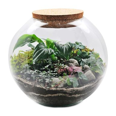 Ogród w słoiku 27 x 26 cm Skrzydłokwiat / Niedośpian