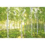 Fotografia ścienna SUNDAY 254.0 x 368 cm KOMAR