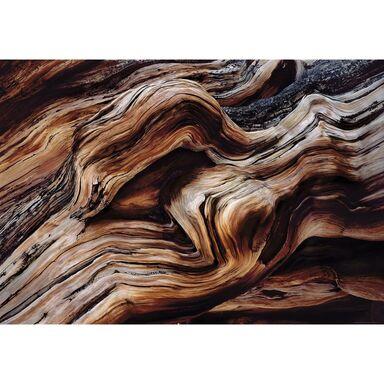 Fototapeta OLD GIANT 254 x 368 cm