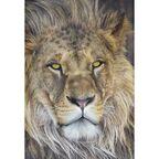 Fototapeta LION 127 x 184 cm