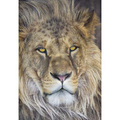 Fototapeta LION 184 x 127 cm