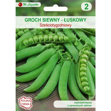 Nasiona warzyw SZEŚCIOTYGODNIOWY Groch siewny łuskowy W. LEGUTKO