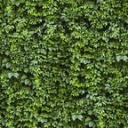 Panel kuchenny szklany Cement green 60 x 60 cm Alfa-Cer