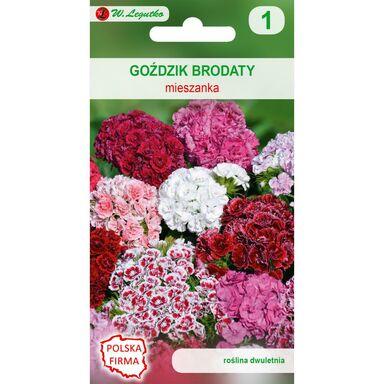 Goździk brodaty o kwiatach pojedynczych MIESZANKA W. LEGUTKO