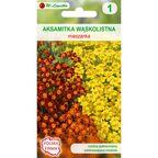 Aksamitka wąskolistna MIESZANKA nasiona tradycyjne 0.5 g W. LEGUTKO
