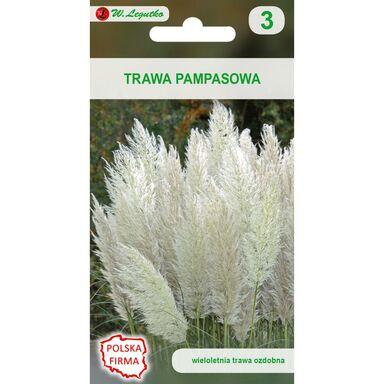 Nasiona kwiatów BIAŁA Trawa pampasowa W. LEGUTKO