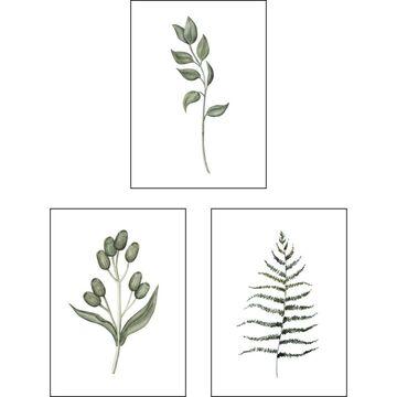 Zestaw 3 plakatów Botanika 13 x 18 cm
