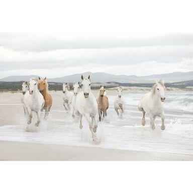 Fototapeta WHITE HORSES 254 x 368 cm