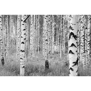 Fototapeta Woods 368 x 248 cm Komar