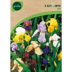 Irys bródkowy MIX 3 szt. cebulki kwiatów GEOLIA